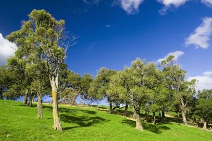 Környezetvédelmi Pályázat – Kiírás a 10-14 éves korosztály számára