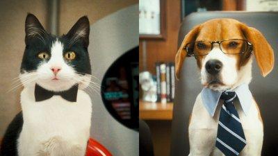 Kutyák és macskák – A rusnya macska bosszúja (mozi)