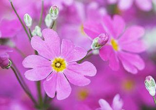A 6 legkedveltebb női virág