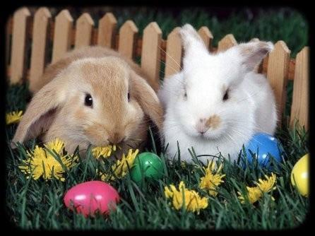 Honnan ered a húsvéti nyúl?