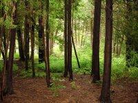 Mesél az erdő!