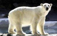 Preventan jegesmedve rajzpályázat gyerekeknek