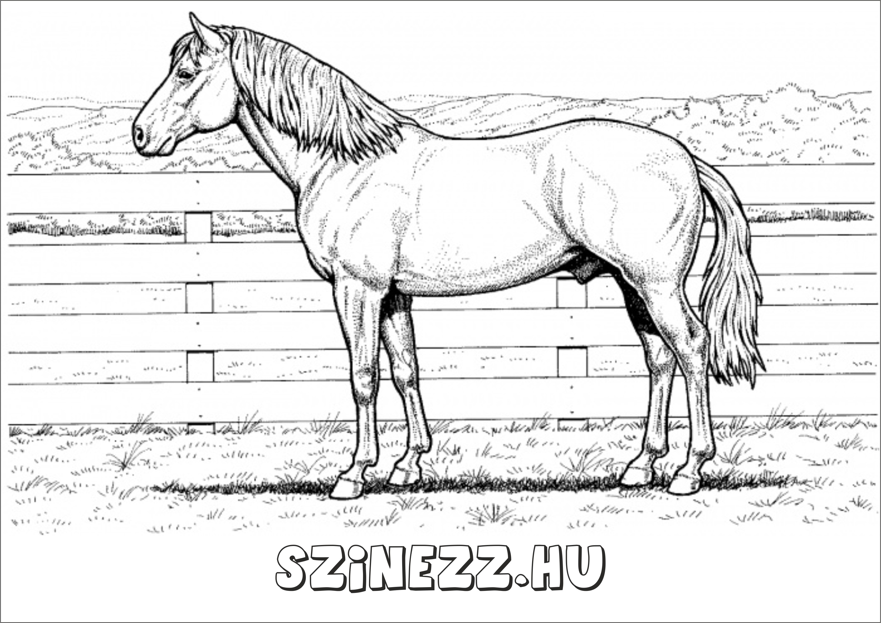 lovas kifestő, lovas színező póni kifestő, én kicsi pónim színező, lovas színező pegazus, unikornis