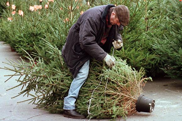 Nem lesz drágább az idei karácsonyfa