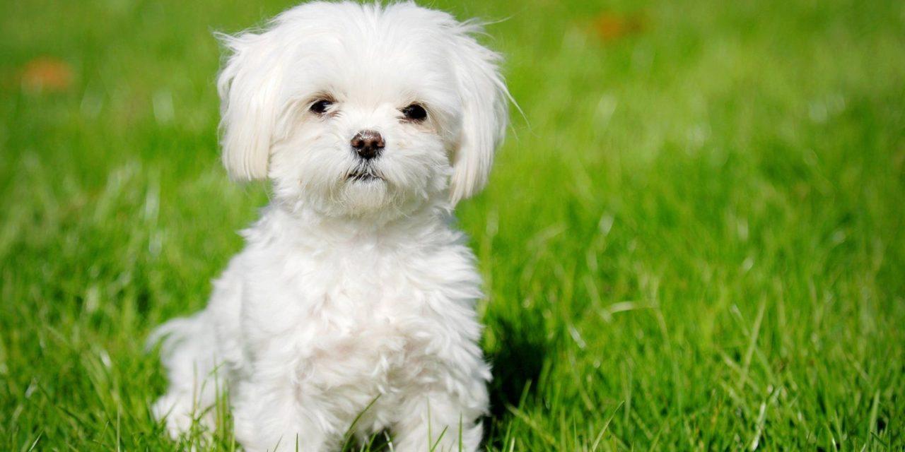 9 tudnivaló, mielőtt magadhoz vennél egy kutyát