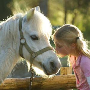 Csaknem 300 iskolában indul a lovaskultúra-oktatás