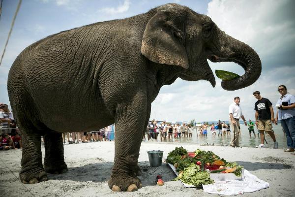 Elefántok strandolnak a Balaton partján – Szombaton jön a Cirkuszok éjszakája!