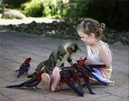 Orgoványi Anikó:  Szereted-e az állatot?