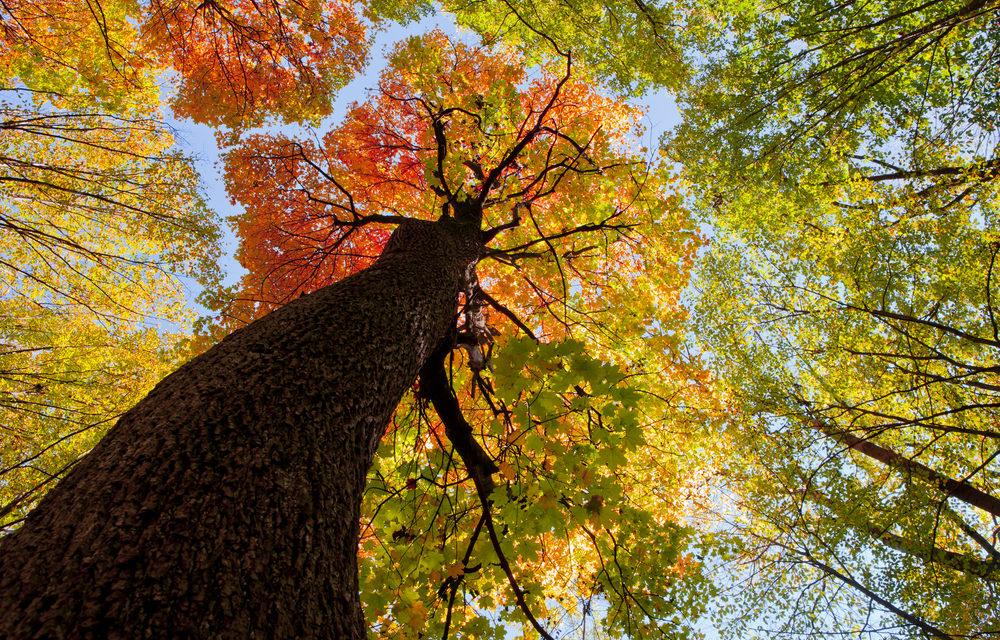 Mit tehetnek az erdők a környezet védelméért?