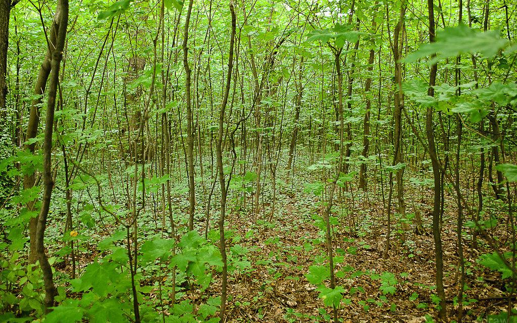 Jókora erdőtelepítési hullám indul – megszólalt a minisztérium
