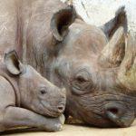 Egyre több állatfaj áll a kihalás szélén