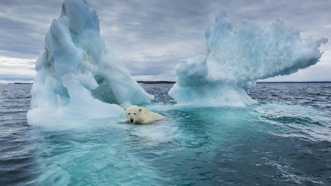 Összeomolhat a Jeges-tenger ökoszisztémája