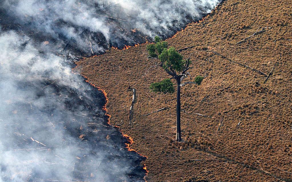 Európa szó szerint felfalja a világ erdeit – most itt a lehetőség, hogy megállítsuk az erdőirtásokat!