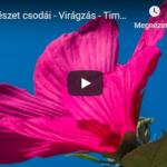 A természet csodái – Virágzás – Time-lapse videó