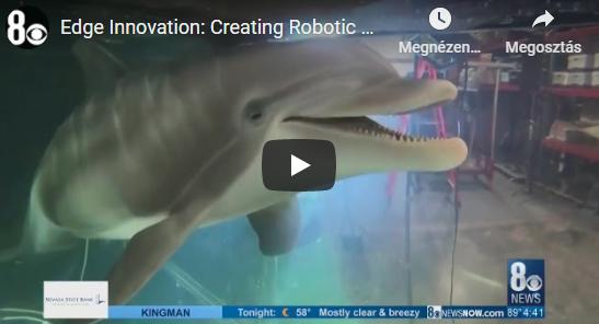 Robotok menthetik meg az igazi delfineket