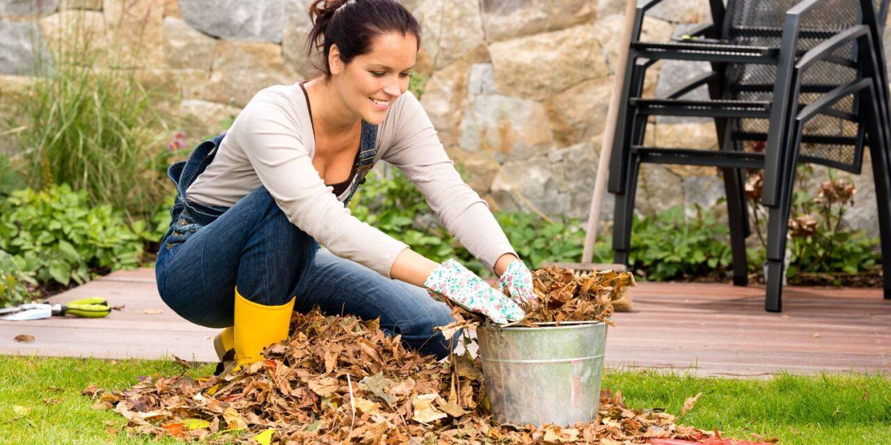 13+ 1 kerti munka és feladat az őszi kertben
