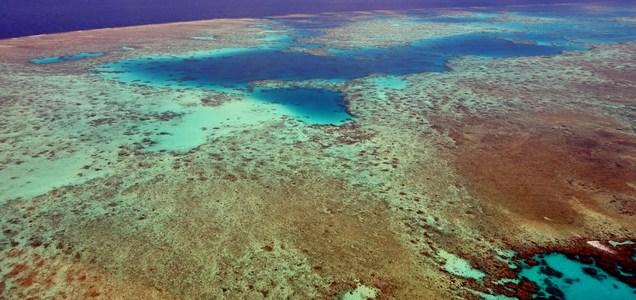 A Nagy- korallzátony a felére zsugorodott 25 év alatt