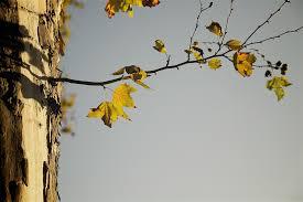 Mai kedvenc: Őszi kérdés -Sárhelyi Erika-