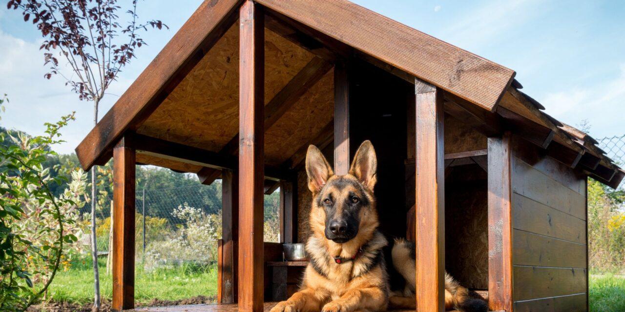 Hogyan kell a kutyaházat téliesíteni?