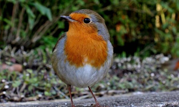 Hogyan segíthetjük a kertünkbe látogató madarakat? I. rész