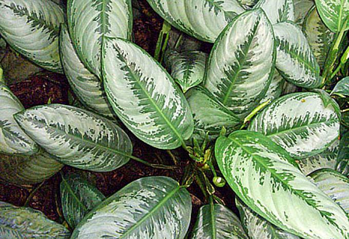 Szobanövények ápolása ősszel