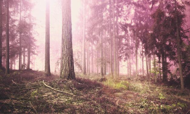 Mai kedvenc: Valaki jár a fák hegyén Kányádi Sándor tollából