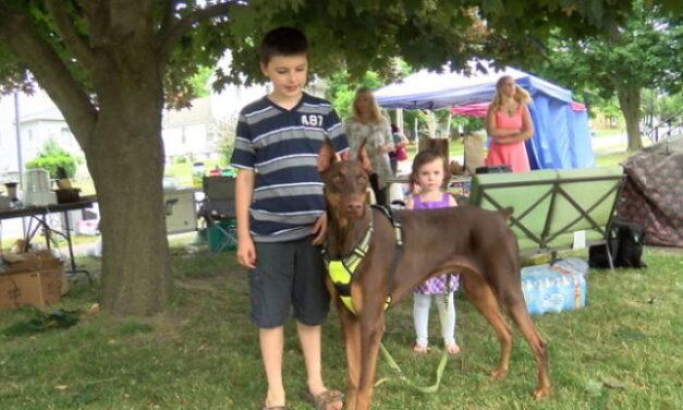 Egy amerikai gyermek minden játékát pénzzé tette kutyája gyógyulásának érdekében