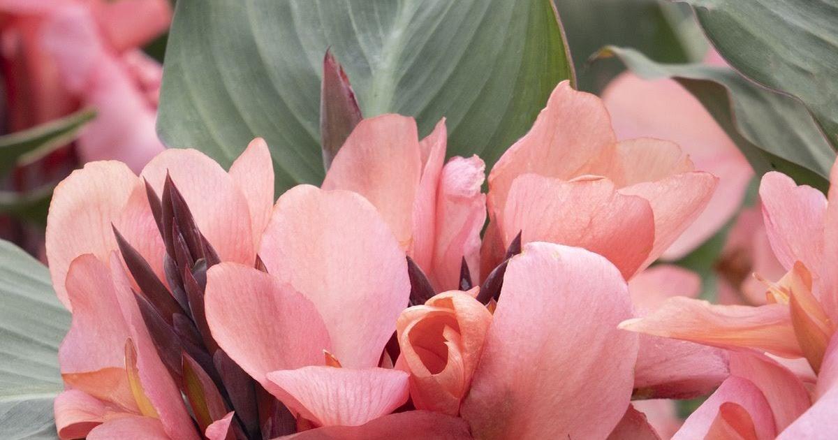 Földünk 10 legszebb virága