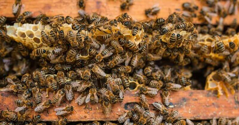 Franciaország az első ország, amely betiltja mind a 5 méhhalálhoz kapcsolódó vegyszert