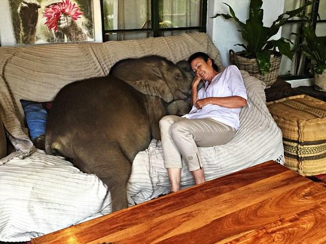 Mindenhova követi megmentőjét a halálból megmentett kiselefánt