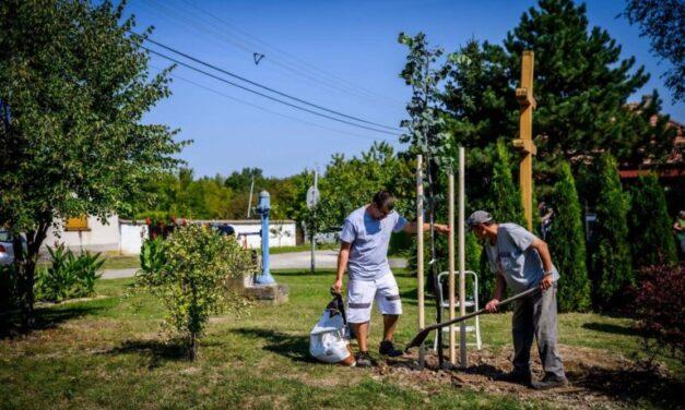 Településfásítási Program: több mint ötezer fát ültettek el az őszi időszakban